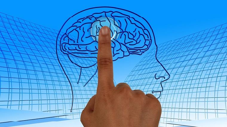 マインド、精神、脳