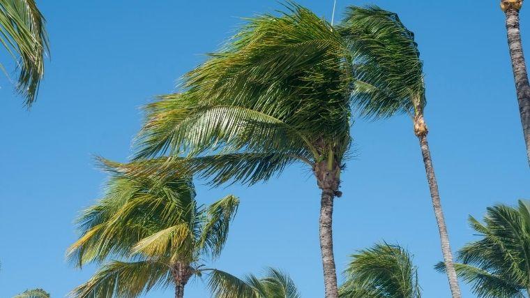 風、強風、台風