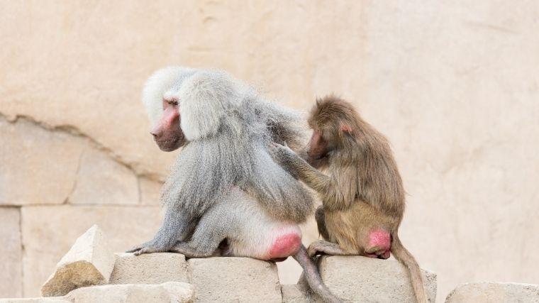 猿、monkey