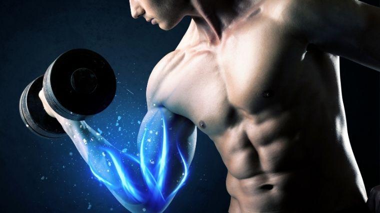 筋肉、プロテイン、肉体、健康